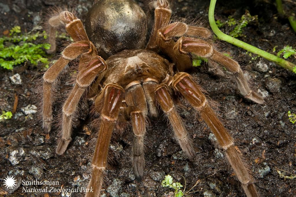 Where to See the World's Biggest Spiders | Travel | Smithsonian