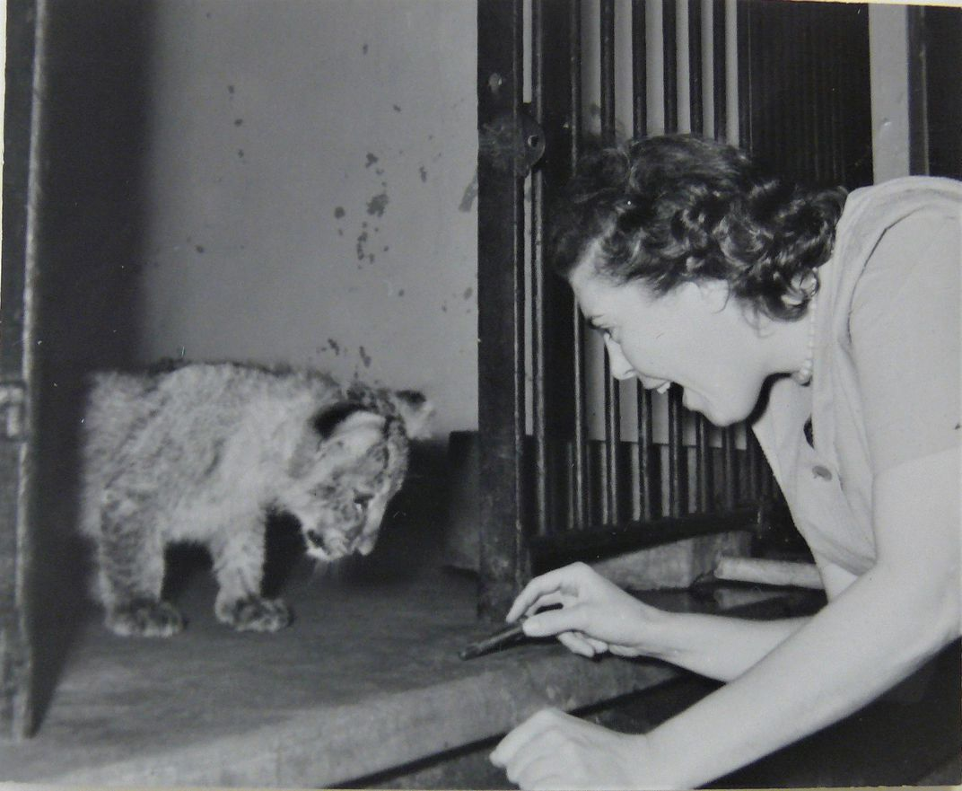 Crimilda with lion cub (at unidentified zoo), Courtesy of Western Michigan University Special Collections, Crimilda Pontes Graphic Arts Archive.