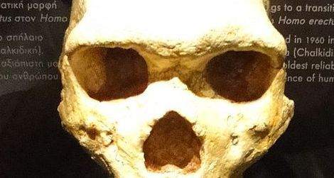 skull from the Petralona Cave