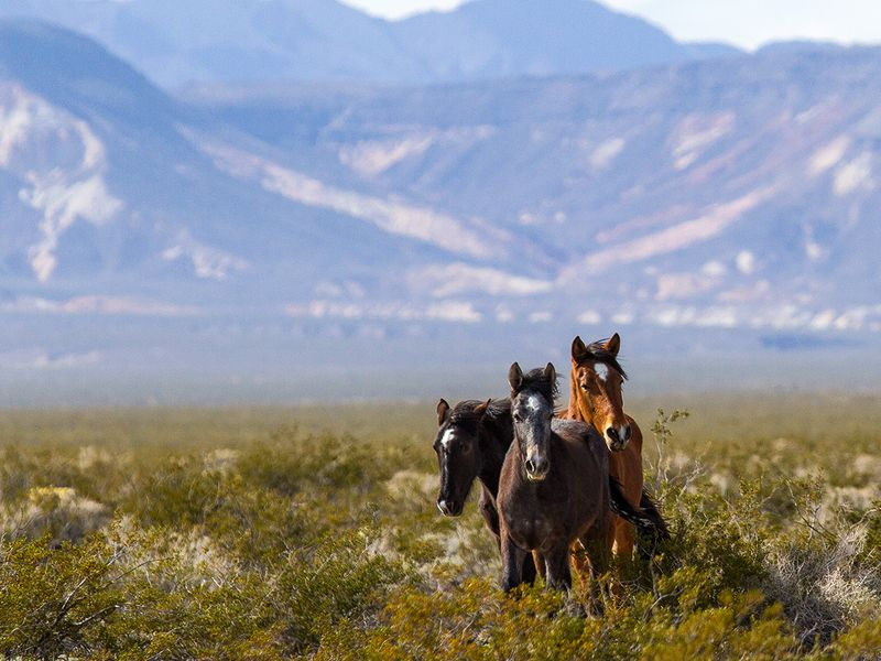 A Brief History of America's Complicated Relationship With Wild Horses