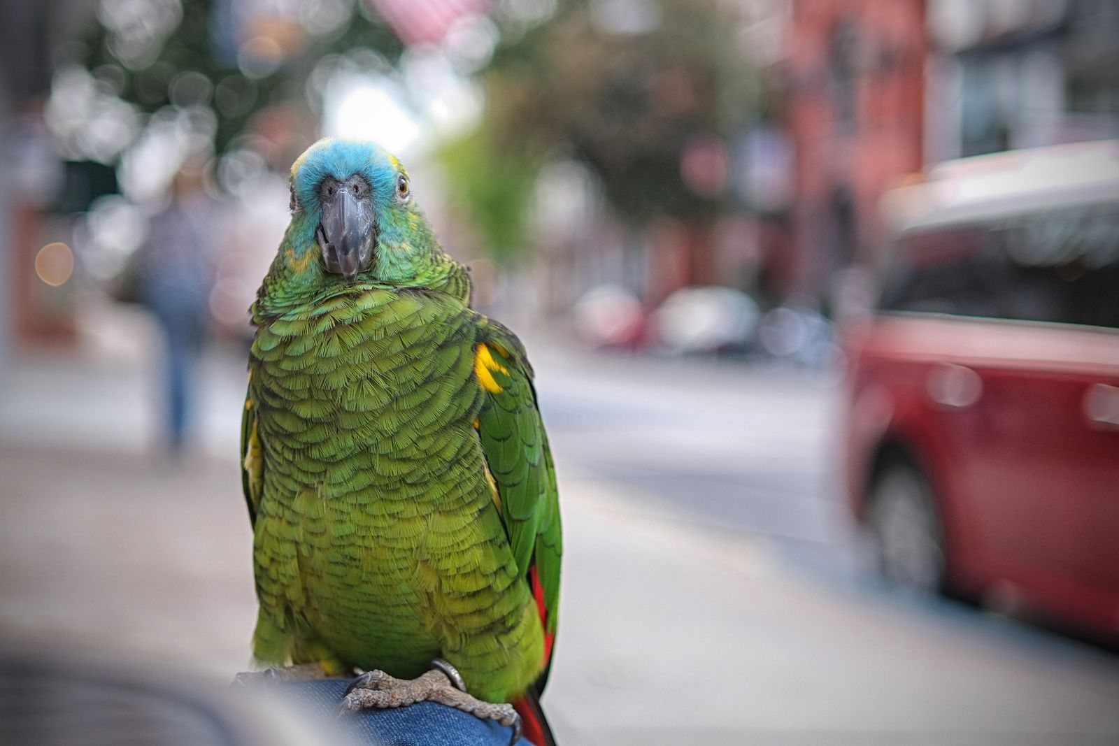 To Save Endangered Species, Should We Bring Them Into Our Cities
