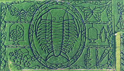 Check Out This Awesome Trilobite Corn Maze