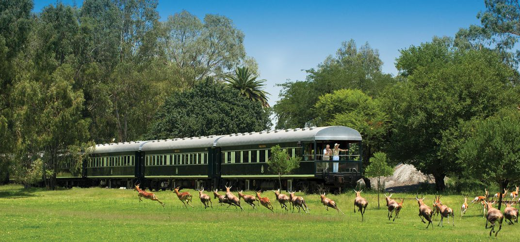 Observing wildlife from the rear of Rovos Rail