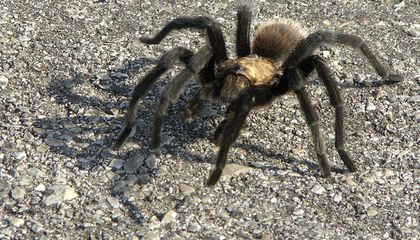 Admitting That Big Ugly Spider Is Terrifying Will Make It Less Frightening