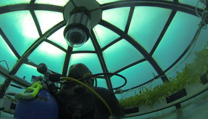 Off the Coast of Italy, Two Divers Are Building Underwater Greenhouses