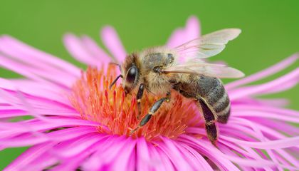 Ozone Is Making Flowers Smell Different to Bees