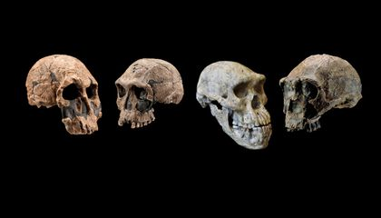 Ability to Adapt Gave Early Humans the Edge Over Other Hominins