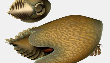Prehistoric Ocean Predator Resembles a Large and Vicious Horseshoe Crab