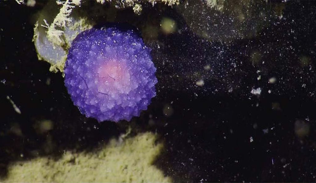 Some deep-sea discoveries defy explanation.