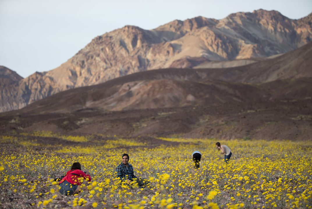 "Death Valley ""super bloom"" carpets desert with color"