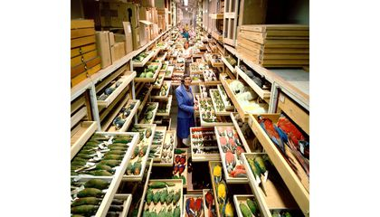 The Story Behind Those Jaw-Dropping Photos of the Collections at the Natural History Museum