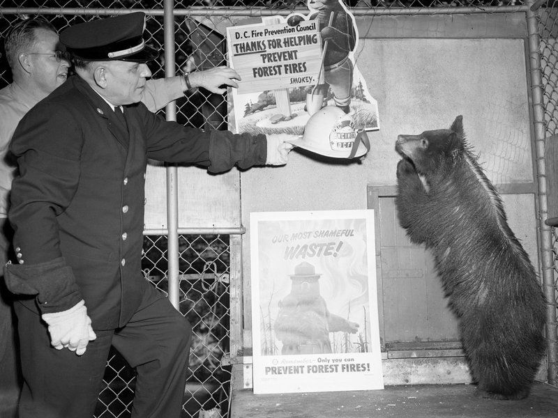 The biography of the real Smokey Bear
