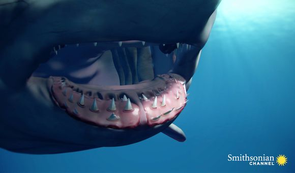 Preview thumbnail for video'A Great White Can Go Through 20,000 Teeth in Its Lifetime