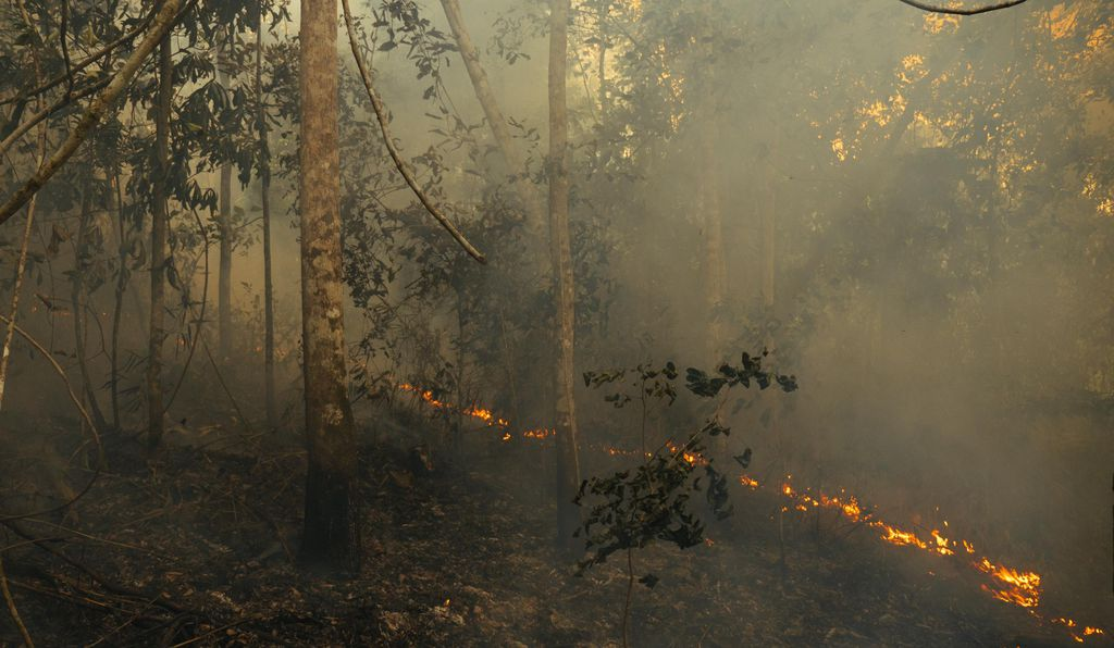 Even controlled wildfires can take a toll on Amazonian biodiversity.