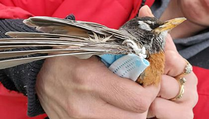 Discarded Covid-19 Masks and Plastic Gloves Are Killing Wildlife
