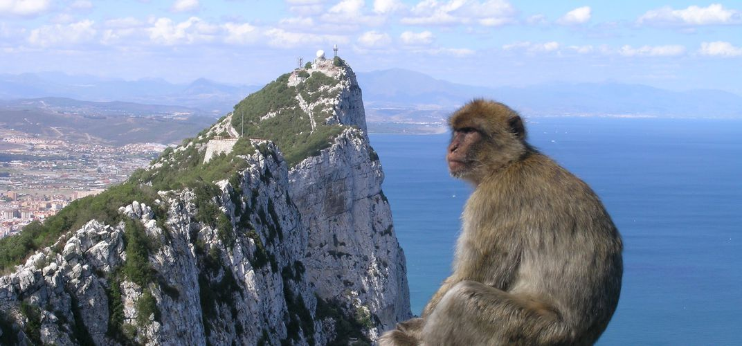 Rock of Gibraltar with Barbary macaque