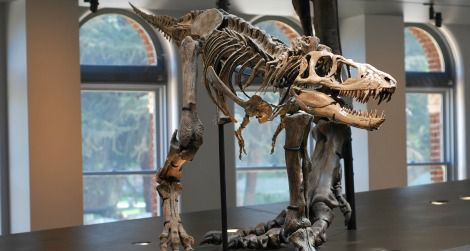 The reconstructed cast of a juvenile Tyrannosaurus in the NHMLA's centerpiece Dinosaur Hall display.