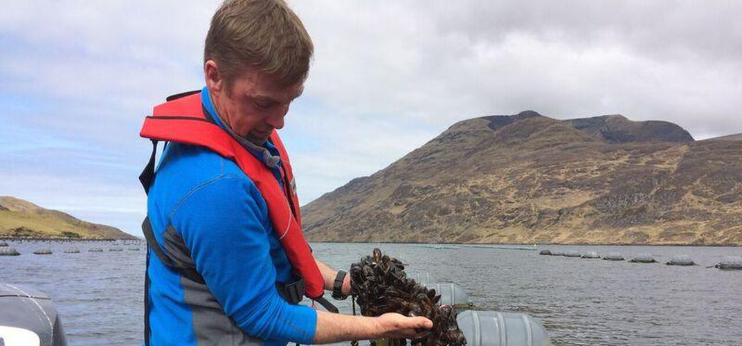 Mussel farming in Connemara