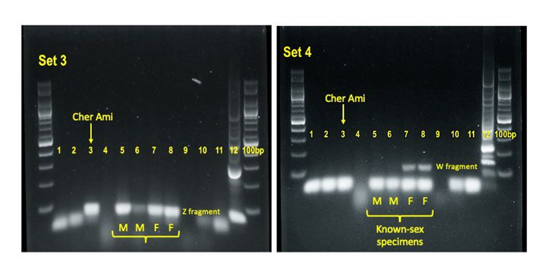 Labeled PCR results on black background