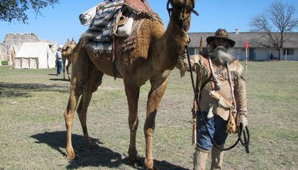 The United States Army Used Camels Until After the Civil War