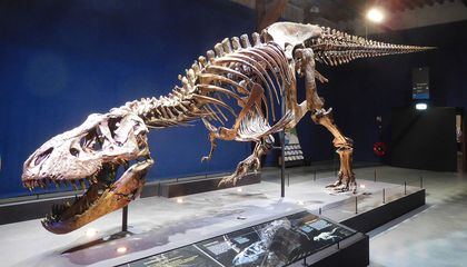 New Study Finds T. Rex Walked at a Slow Pace of Three Miles Per Hour