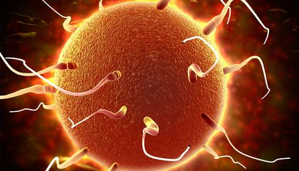 Dads Pass On More Than Genetics in Their Sperm