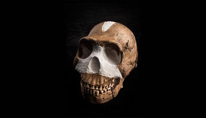 What Makes a Fossil a Member of the Human Family Tree?