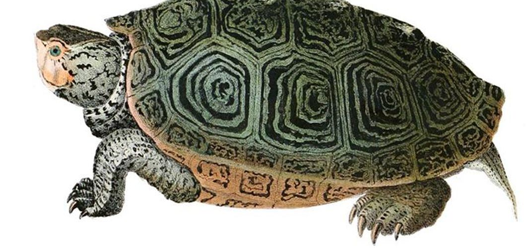 Caption: How the Turtle Got Its Shell