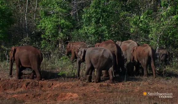 Preview thumbnail for video'How Poaching Led to Serial Killer Elephants