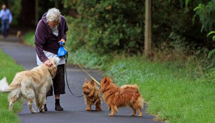 Dog Walks Are Good Exercise for Seniors—But Be Careful, Fractures Are on the Rise