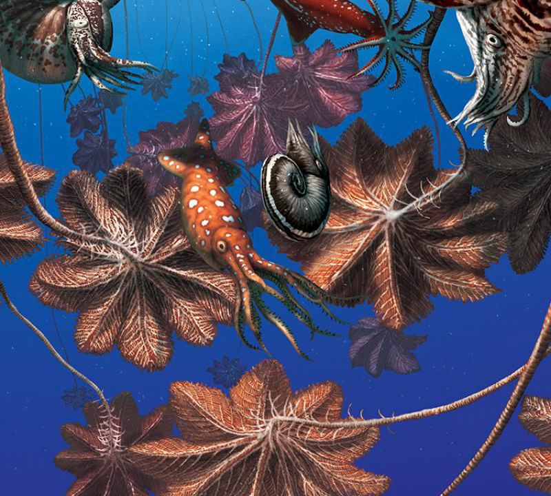 Ancient Sea Life May Have Hitched Across Oceans on Giant Living Rafts