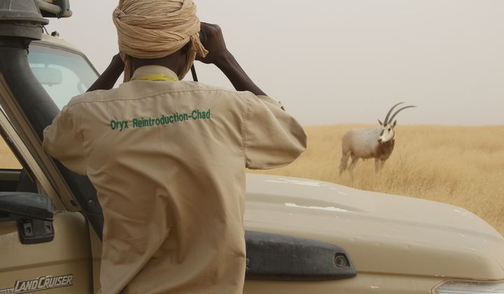 Sahara Conservation Fund ecological monitoring member Habib Ali (next to vehicle) engaging in typical day-to-day monitoring of reintroduced oryx. Photo credit: Tim Wacher, Zoological Society of London.