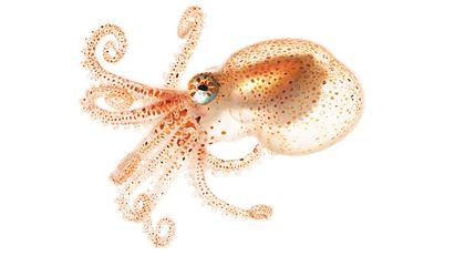 Gorgeous Portraits of Spineless Sea Creatures