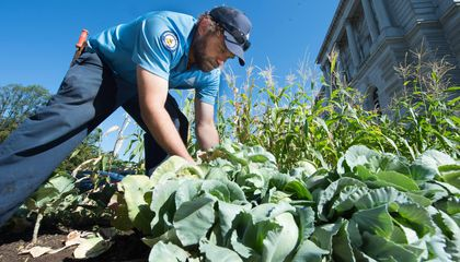A Century After WWI, a Victory Garden Sows Seeds of Remembrance