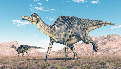 Chew on This: Powerful Jaws Fueled a Jurassic Herbivore Boom