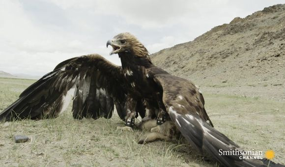 Preview thumbnail for video'Meet the Nomad Girl Who Hunts With a Golden Eagle