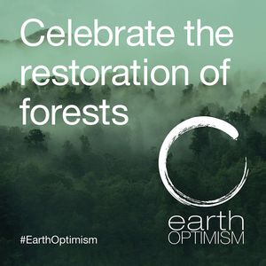Celebrate the restoration of forests