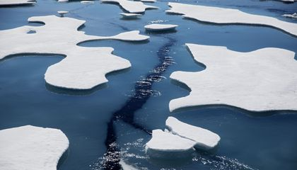 Image: Arctic voyage finds global warming impact on ice and animals
