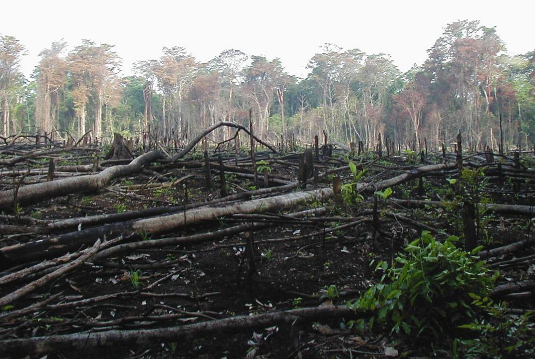rainforest depletion adverse effects on the environment How to save tropical rainforests  a major role when it comes to depletion of forest cover  where damage to one can result in a range of adverse effects on.