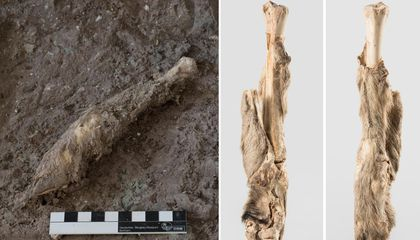 Researchers Recover DNA From 1,600-Year-Old, Naturally Mummified Sheep Leg