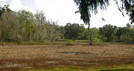 A nearly dry horseshoe lake at Brazos Bend State Park, Texas