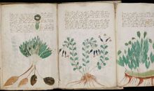 Artificial Intelligence Takes a Crack at Decoding the Mysterious Voynich Manuscript