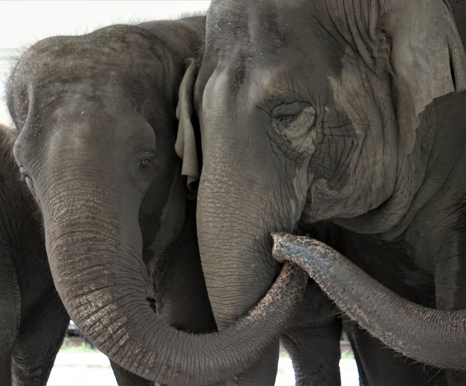 Retired Circus Elephants to Move to 2,500-Acre Wildlife Refuge Next Year