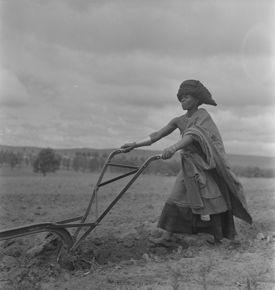 Xhosa woman plowing, Transkei, South Africa