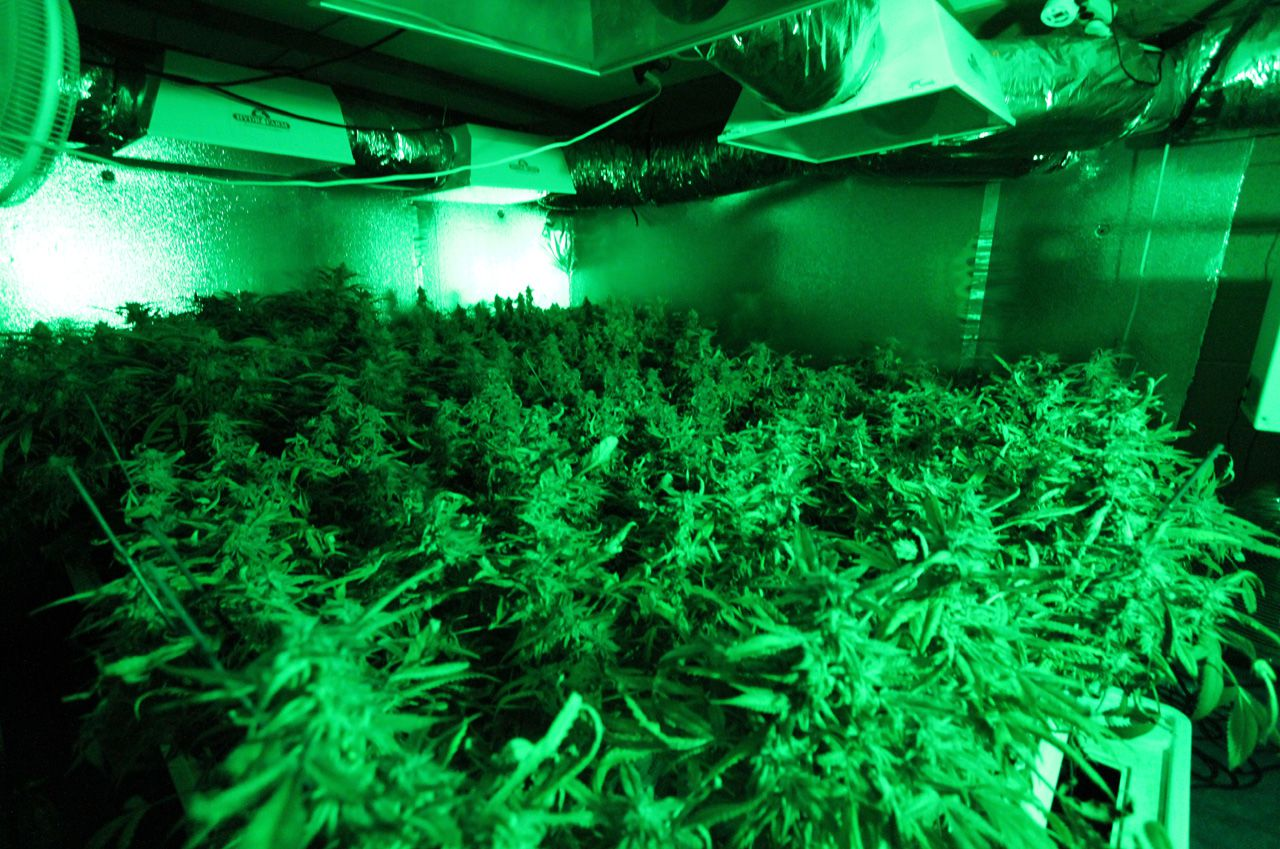 Grow An Ounce Of Pots Inside Can Emit As Much Carbon As Burning A Full Tank Of Gas |  Smart News