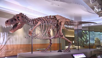 In All of Time, 2.5 Billion Tyrannosaurus Rexes Have Roamed Earth