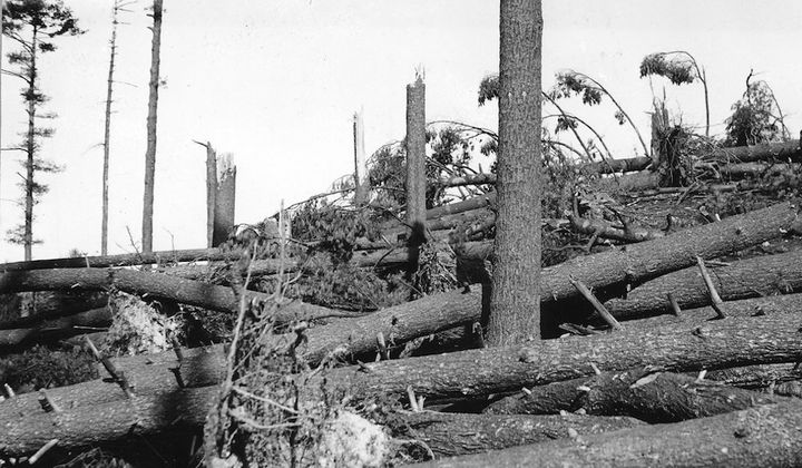 The 1938 Hurricane That Revived New England's Fall