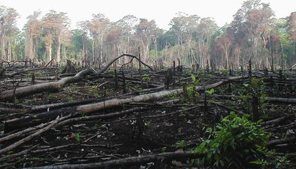 Cocaine Is Destroying Forests in Central America