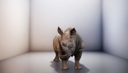 The Northern White Rhino Went Extinct, but for Two Minutes at a Time, the Animal Makes a Digital Comeback