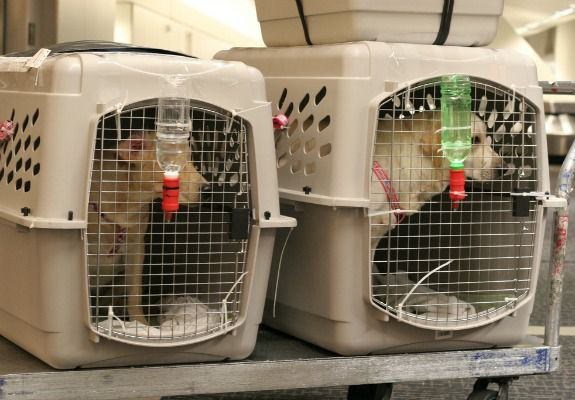 Can You Take Dogs On International Flights